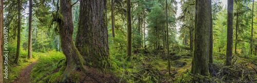 Hoh Rainforest, Olympic National Park, Washington state, USA - 100145897
