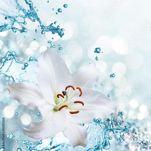 kwiat-lilia-na-tle-plusk-wody