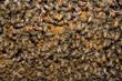 Obrazy na płótnie, fototapety, zdjęcia, fotoobrazy drukowane : bees inside beehive macro close up