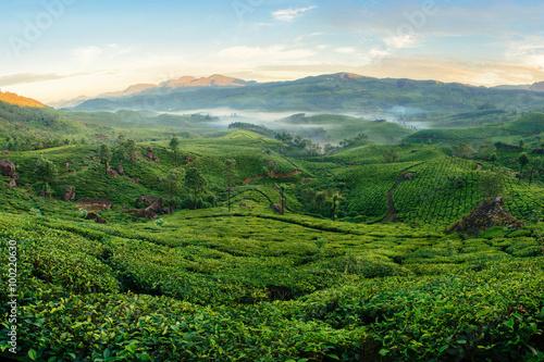 Foto op Canvas Koffie Green hills of tea plantations in Munnar