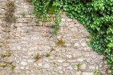 Fototapety Old stone wall with ivy as background