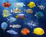 Fototapety Great collection of a tropical fish