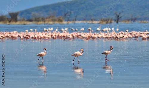 Foto op Aluminium Flamingo Pink flamingos in water