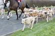 Obrazy na płótnie, fototapety, zdjęcia, fotoobrazy drukowane : Fox hunt, horse and hounds