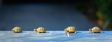 quatre jeune tortues en file indienne