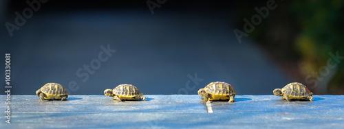 Aluminium Schildpad quatre jeune tortues en file indienne