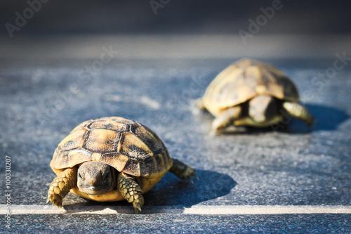 Aluminium Schildpad Course de tortue