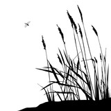 Fototapety Reed and flying dragonfly - vector illustration, black and white