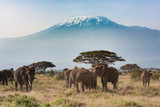 Plains of Africa at Mt. Kilimanjaro