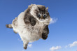 funny cat levitate in blue sky