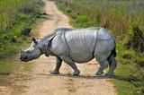 Indian rhinoceros in the Kaziranga national park