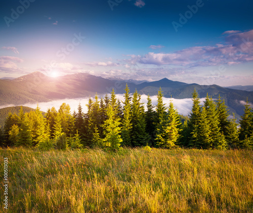 Fototapeta Colorful summer scene in the Carpathian mountains