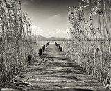 old wooden jetty - 100514835