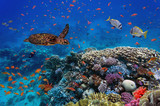 colorful coral reef with many fishes and sea turtle - 100526045