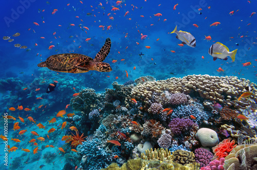 Plagát, Obraz colorful coral reef with many fishes and sea turtle