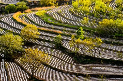 Foto op Plexiglas Cyprus Terraced rice field in rice season in China