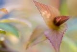 erste Triebe und Blätter im Gegenlicht