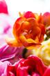 Obrazy na płótnie, fototapety, zdjęcia, fotoobrazy drukowane : Bunch of flowers