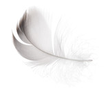 small gray goose feather on white background