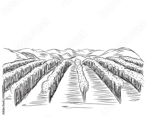 Naklejka Hand Drawn Landscape with Fields.
