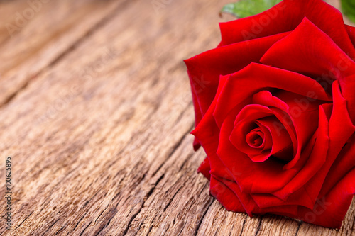 Poster Red rose on rustic wooden background