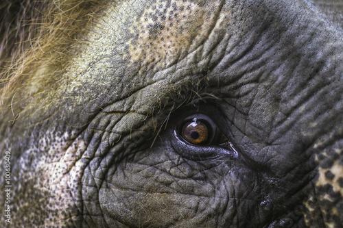 Poster, Tablou Elephant eye