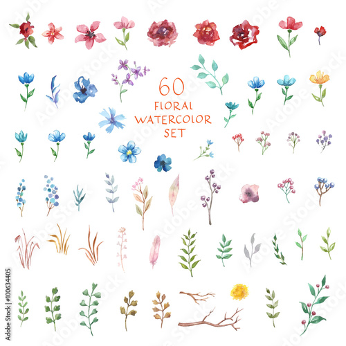 Floral watercolor set. Different vector elements. - 100634405