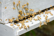 Obrazy na płótnie, fototapety, zdjęcia, fotoobrazy drukowane : beehive