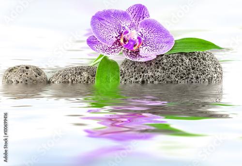 odbicia-orchidei-i-bambusa-na-kamyczkach