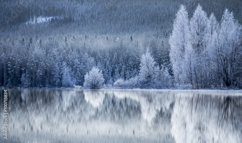 Obraz Forest reflected in frozen lake