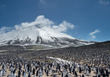 Colony of penguins with snowy mountain in the background, Zavodovski Island, South Sandwich Islands, Antarctica