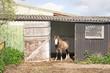 Obrazy na płótnie, fototapety, zdjęcia, fotoobrazy drukowane : Pony standing in the doorway of his field shelter
