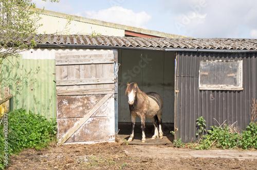 Zdjęcia na płótnie, fototapety, obrazy : Pony standing in the doorway of his field shelter
