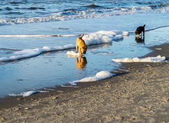 Hunde am Meer Nordsee