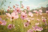 Fototapety Cosmos flower blossom in garden
