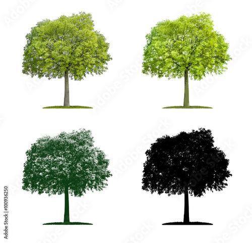 Fototapeta Baum in vier unterschiedlichen Illustrationstechniken - Zürgelb