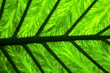 abstract leaf and  background