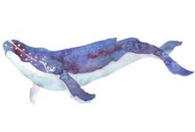 Akwarela wieloryba