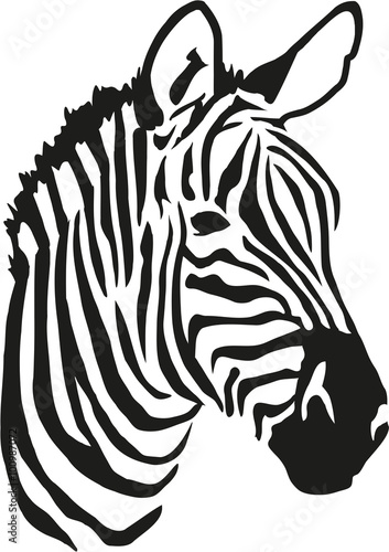 Obraz na Szkle Zebra head