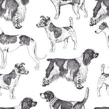 Background Dog