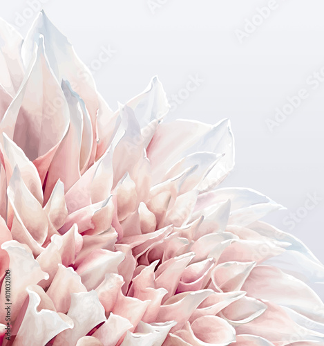 Dahlia Flower background - 101032800