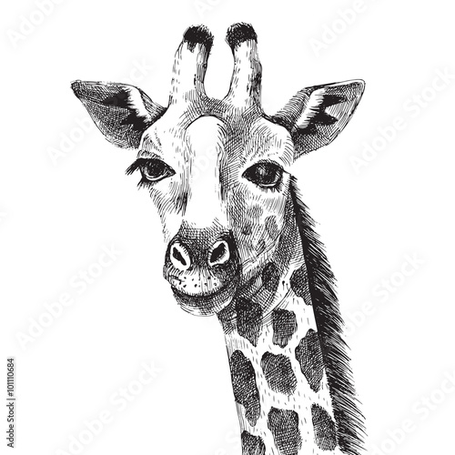 Hand drawn giraffe portrait - 101110684
