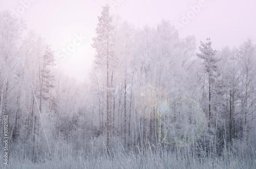 зимний сказочный лес с искрящимся солнечным бликом в нежных тонах розовый кварца и голубая безмятежность.  - 101121082