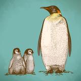 Engraving antique illustration of three king penguins
