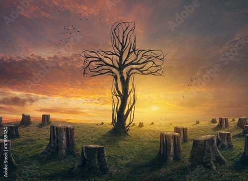 Plakat Cross and stumps