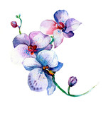 Fototapety the new view of orchid watercolor hand drawn for postcard isolated on the white background