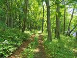洞爺湖 森の小道