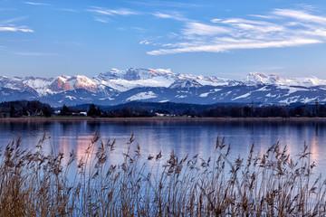 Greifensee, Schweizer See, mit Schilfgürtel im Vordergrund und schneebedeckte Glarner Alpen im Hintergrund © paulgsell