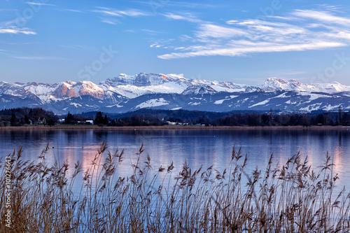 Greifensee, Schweizer See, mit Schilfgürtel im Vordergrund und schneebedeckte Glarner Alpen im Hintergrund