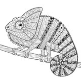 Chameleon. Adult antistress coloring page. Black and white hand drawn doodle for coloring book